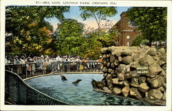 Sea Lion, Lincoln Park Postcard