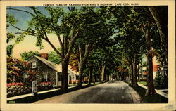 Famous Elms Of Yarmouth On King's Highway Postcard