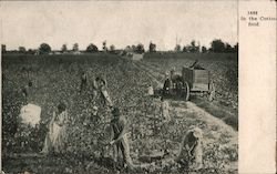 1888 In the Cotton Field. People Working in the Field, Horse Drawn Cart