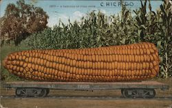 A very large ear of corn on a flat bed trailer Postcard