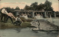 Three men pulling a fish to shore Postcard