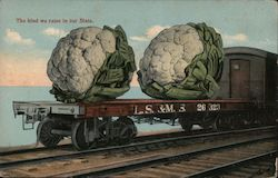 Two large heads of cauliflower on the flat bed train that says LS & MS 26 323 Postcard