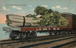The kind we raise in our State. - Giant Celery on a Rail Deck. Postcard