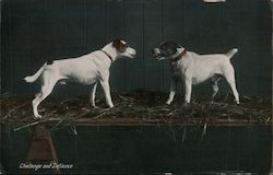 """Challenge and Defiance"" - Two Dogs Snarling at Each Other"