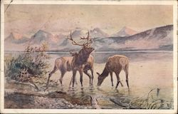 Elk in a Lake, Russell Art F. H. Cronkhite Postcard