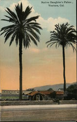 Native Daughter's Palms, Ventura, Cal. Postcard