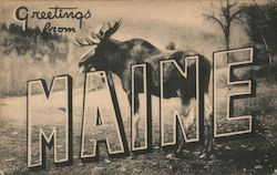 Greetings from Maine - Moose Postcard