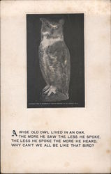 A wise old owl lived in an oak Postcard