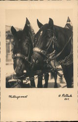 Noon Races - Two Horses Wearing Hames Pulling a Wagon