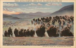 Buffalo Stampede, Lamar Valley