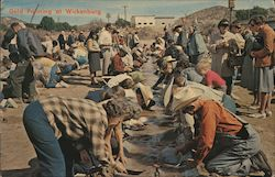 Gold Panning at Wickenburg