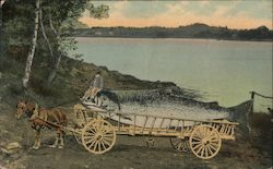 Comic card of fishing catch of whale size fish in horse drawn wagon Postcard