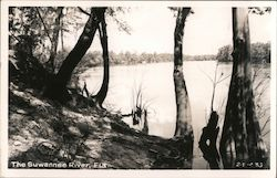 The Suwannee River Postcard