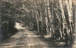 Dirt road through trees Postcard