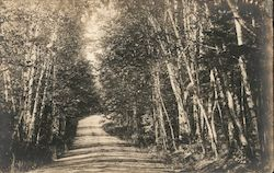 Dirt road through the trees Postcard