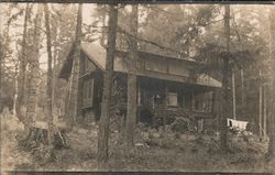 "Lake Steilacoom Cabin in Woods ""The Dingle"" Postcard"