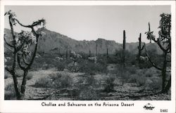 Chollas and Sahuaros on the Arizona Desert Postcard