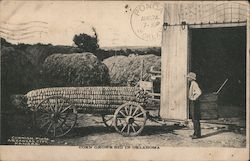Corn Grows Big in Oklahoma Postcard
