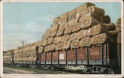 Train Loads of Cotton for Export Postcard