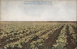 A Texas Gulf Coast Cabbage Field - Reached by Rock Island-Frisco Lines