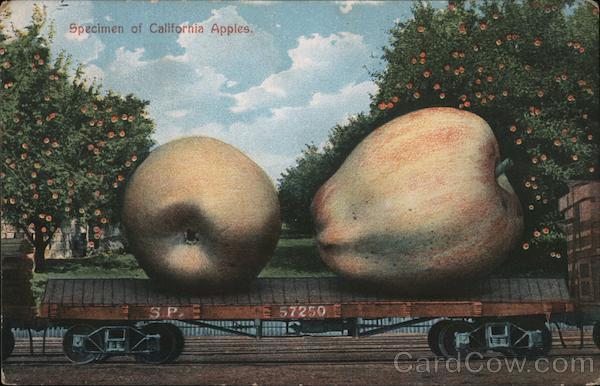 Specimen of California Apples Exaggeration