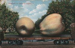 Specimen of California Apples Postcard