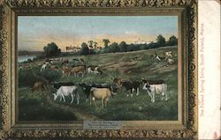 Painting of The Poland Spring Dairy Postcard