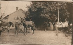 Man with Horses Postcard