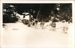 Dogs and dog sled standing in the snow