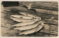 Group of 6 fish Exposed 1/2 second f16 dark cloudy day Postcard