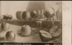 Loading the Big Red Apple, Washington Postcard