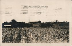 Sugar Cane Field and Mill Postcard