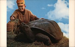 Big Gussie, Largest Dryland Tortoise in Captivity Postcard