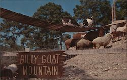Billy Goat Mountain - Floridaland Postcard