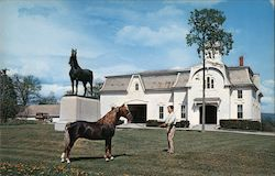 University of Vermont - Morgan Horse Farm Postcard