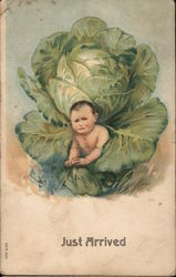 Just Arrived - Baby in Cabbage Postcard