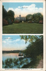 Magnolia on the Ashley Postcard
