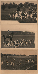 Lot of 3: Fox Hunting with Hounds Postcard