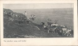 The reindeer camp and herder Postcard