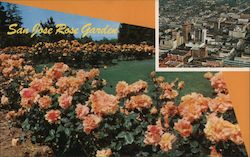 San Jose Rose Garden Postcard