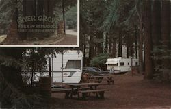 River Grove Park in the Redwoods Travel Trailers - Campers Postcard