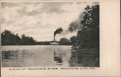 Scene on Pocomoke River Postcard