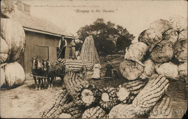 Bringing in the Sheaves - Loading Giant Vegetables