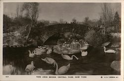 Vine Arch Bridge, Central Park Postcard
