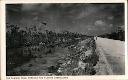 The Tamiami Trail through the Florida Everglades, black and white photo Postcard