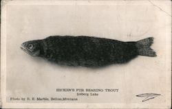 Hicken's Fur Bearing Trout Iceberg Lake Postcard