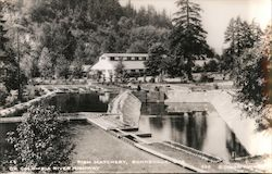 Fish Hatchery on Colombia River Highway Postcard