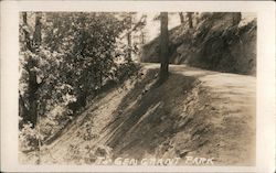 Road Leading To Gen. Grant Park Postcard