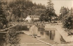 Fish Hatchery on Columbia River Highway Postcard