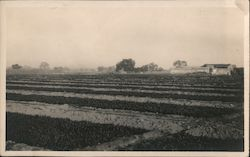 Farmland, rows of crops Postcard